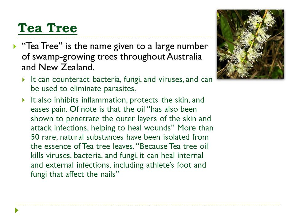 Tea Tree Tea Tree is the name given to a large number of swamp-growing trees throughout Australia and New Zealand.