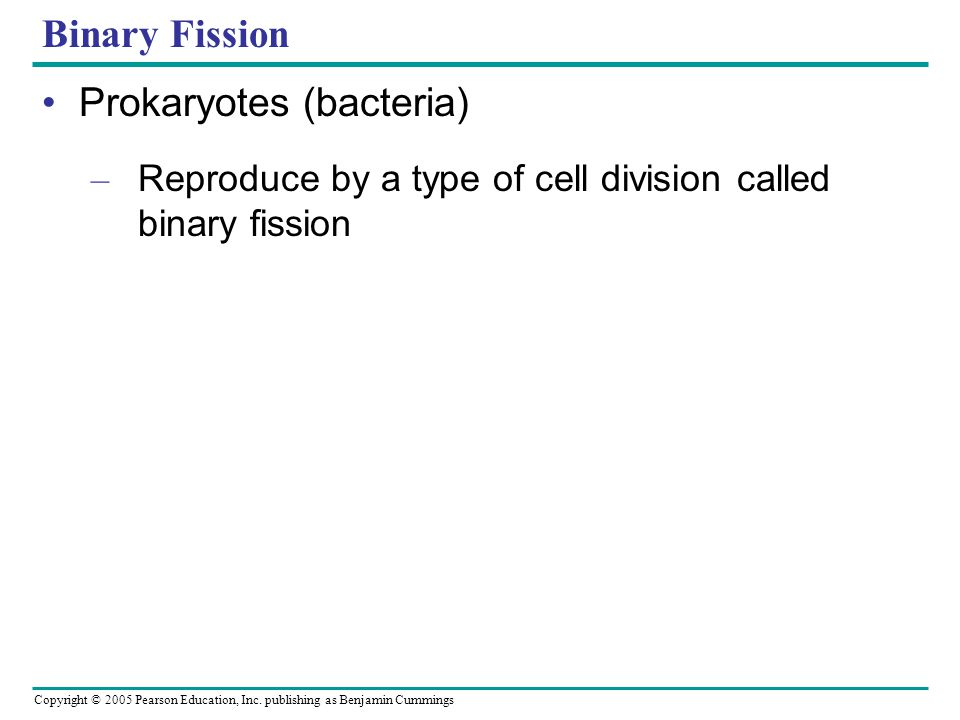 Prokaryotes (bacteria)