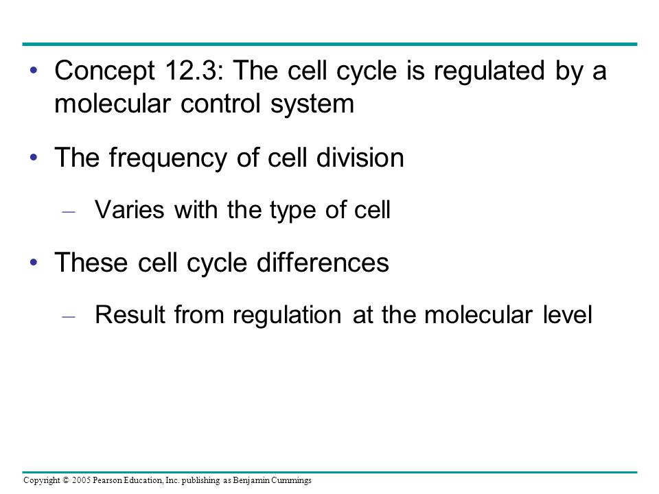 The frequency of cell division