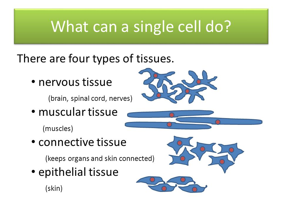 What can a single cell do
