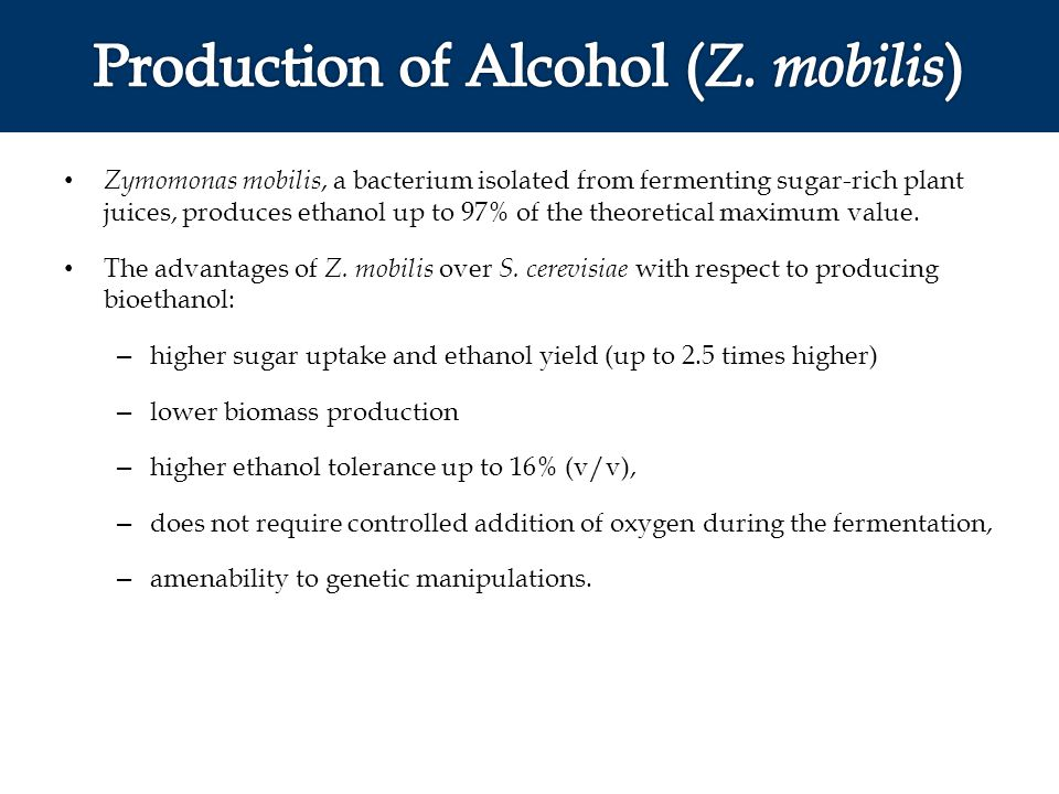 Production of Alcohol (Z. mobilis)