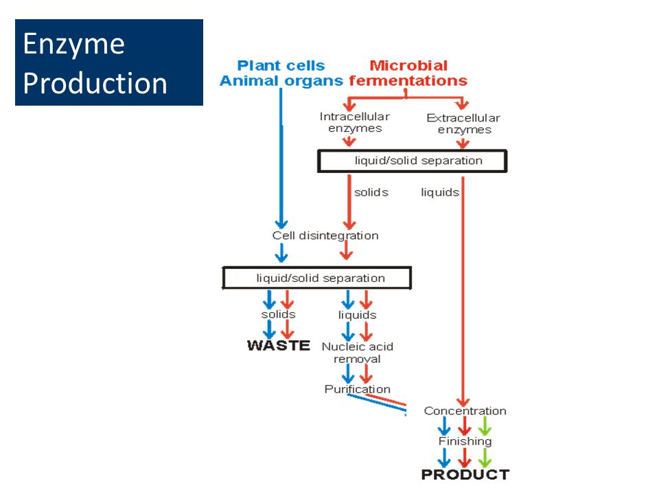 Enzyme Production