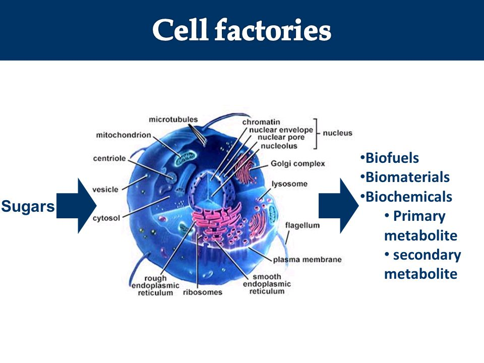 Cell factories Biofuels Biomaterials Biochemicals Primary metabolite