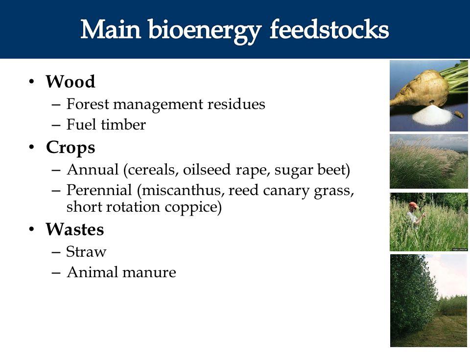Main bioenergy feedstocks