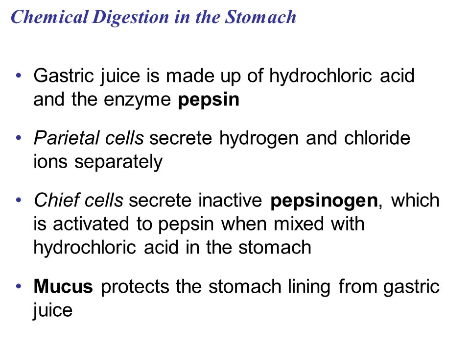 Chemical Digestion in the Stomach