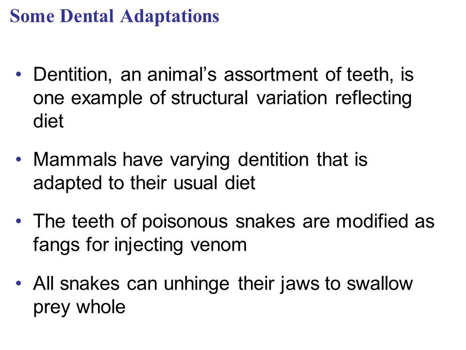 Some Dental Adaptations
