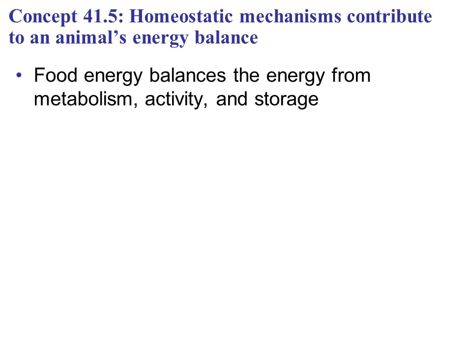 Concept 41.5: Homeostatic mechanisms contribute to an animal's energy balance