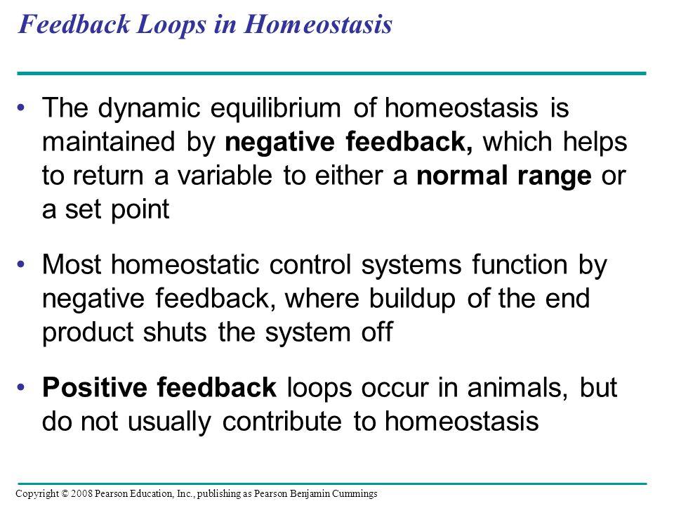 Feedback Loops in Homeostasis