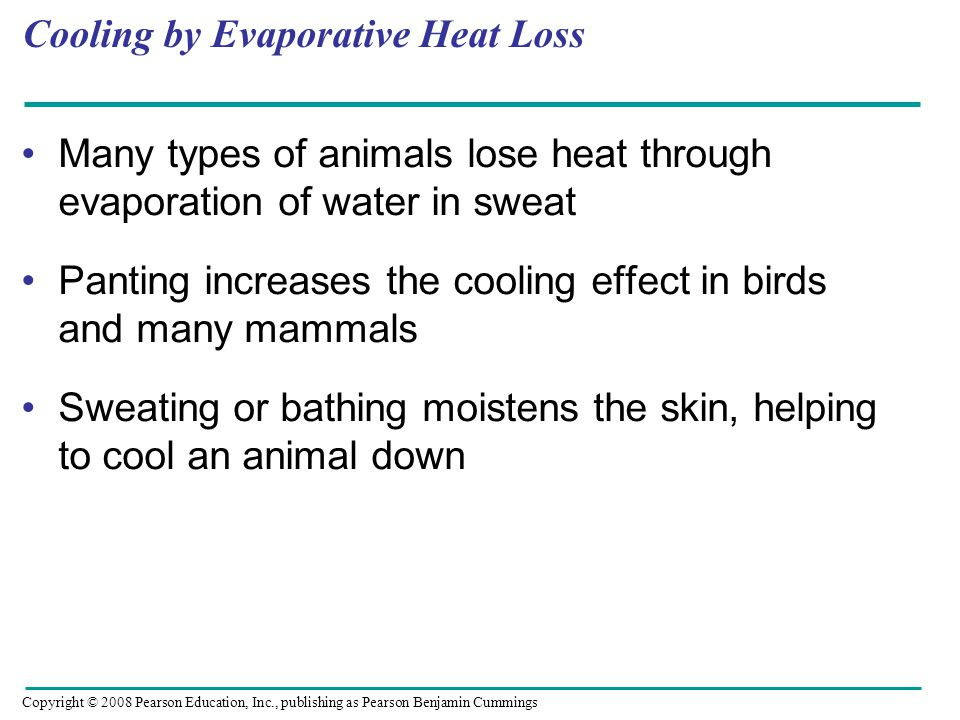 Cooling by Evaporative Heat Loss
