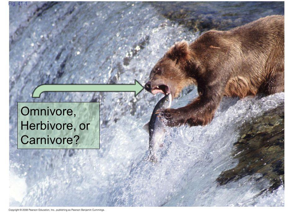 Omnivore, Herbivore, or Carnivore