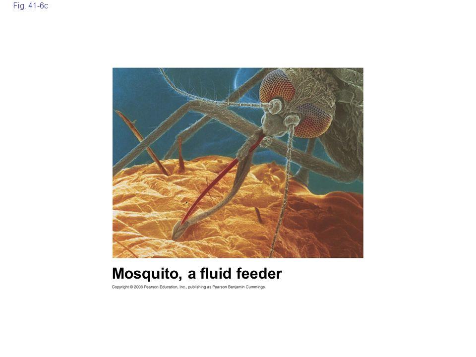 Mosquito, a fluid feeder