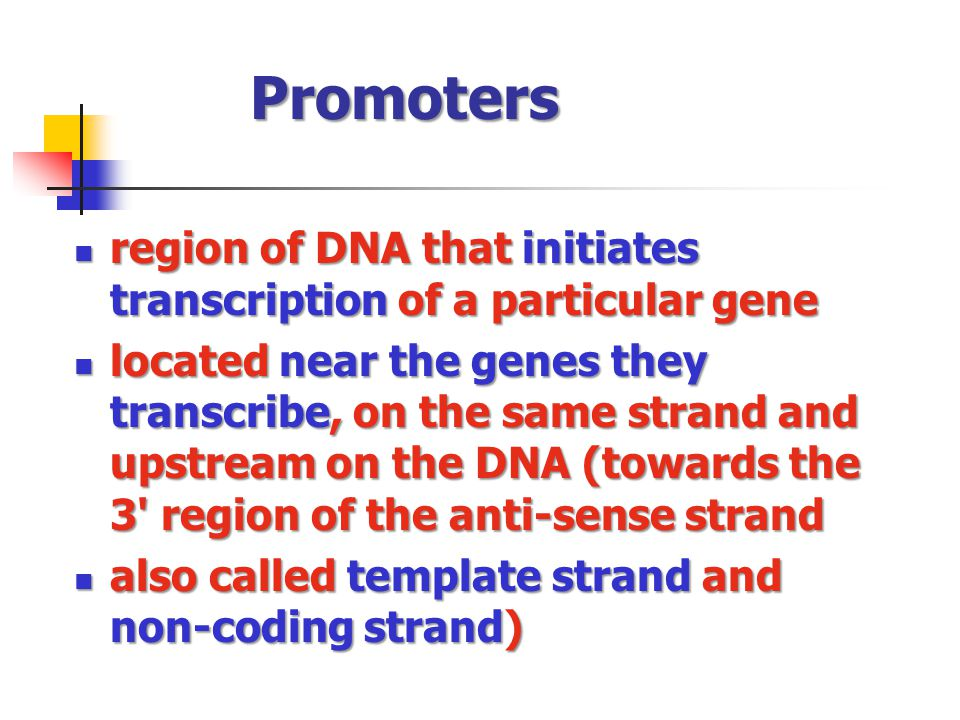 Designer genes c 2014 national bio rules committee for Difference between template and coding strand