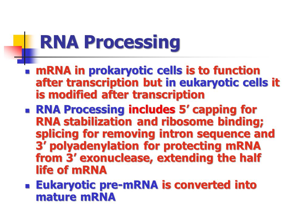 RNA Processing mRNA in prokaryotic cells is to function after transcription but in eukaryotic cells it is modified after transcription.