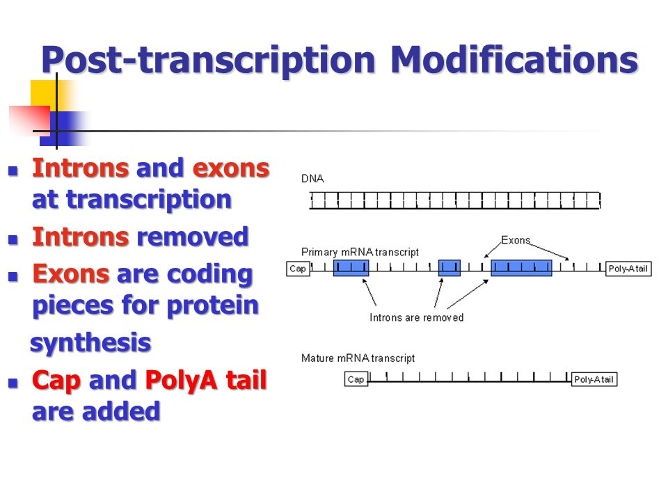 Post-transcription Modifications