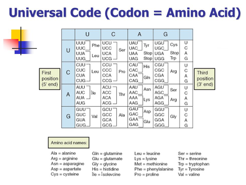 Universal Code (Codon = Amino Acid)