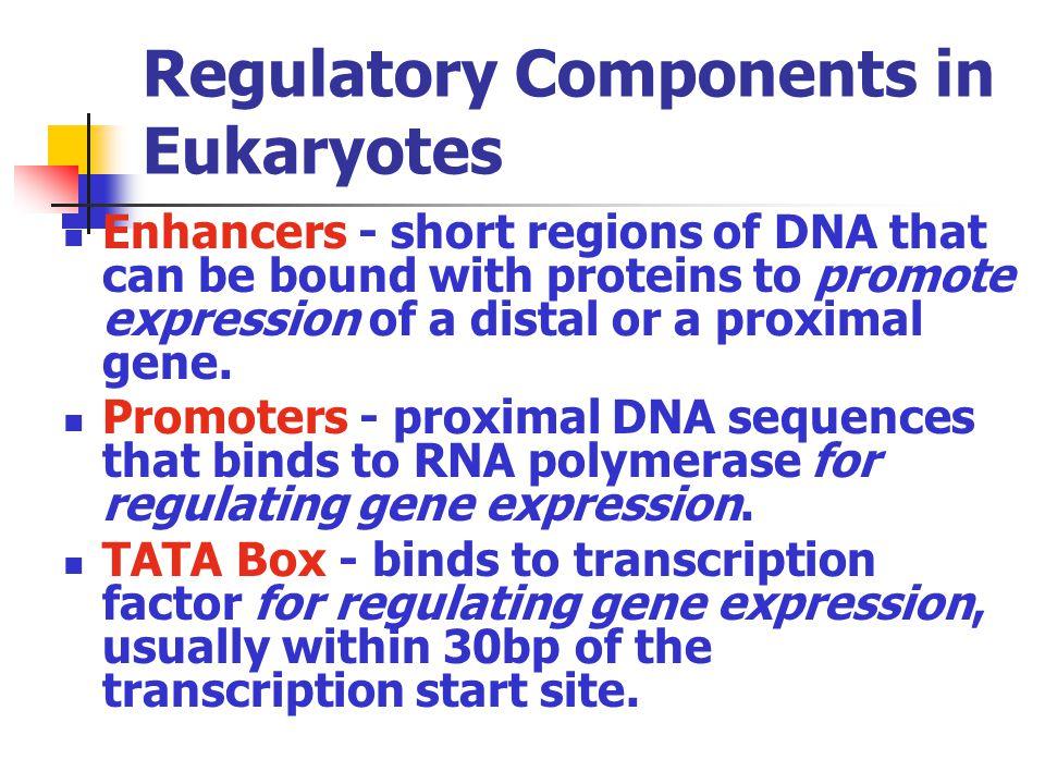 Regulatory Components in Eukaryotes