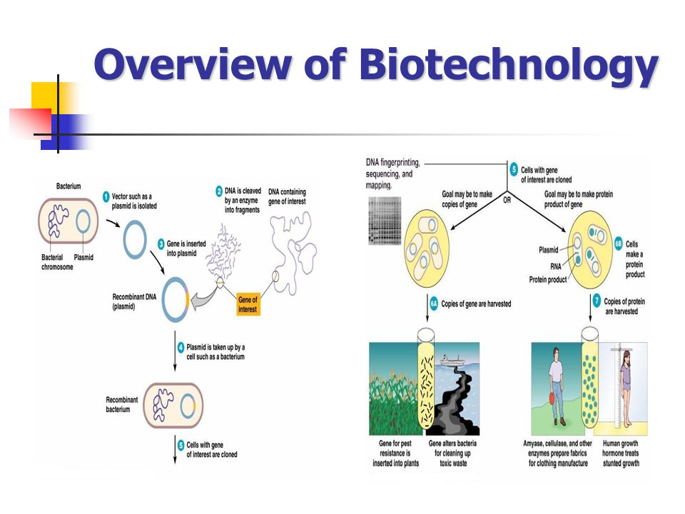 Overview of Biotechnology