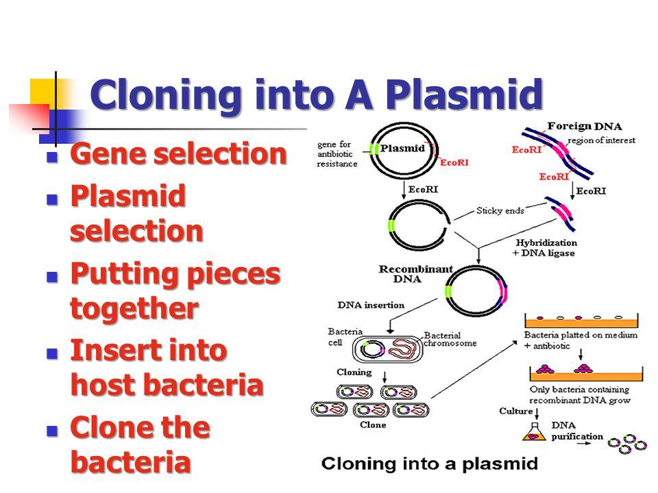 Cloning into A Plasmid Gene selection Plasmid selection