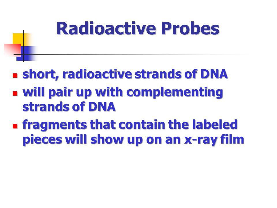 Radioactive Probes short, radioactive strands of DNA
