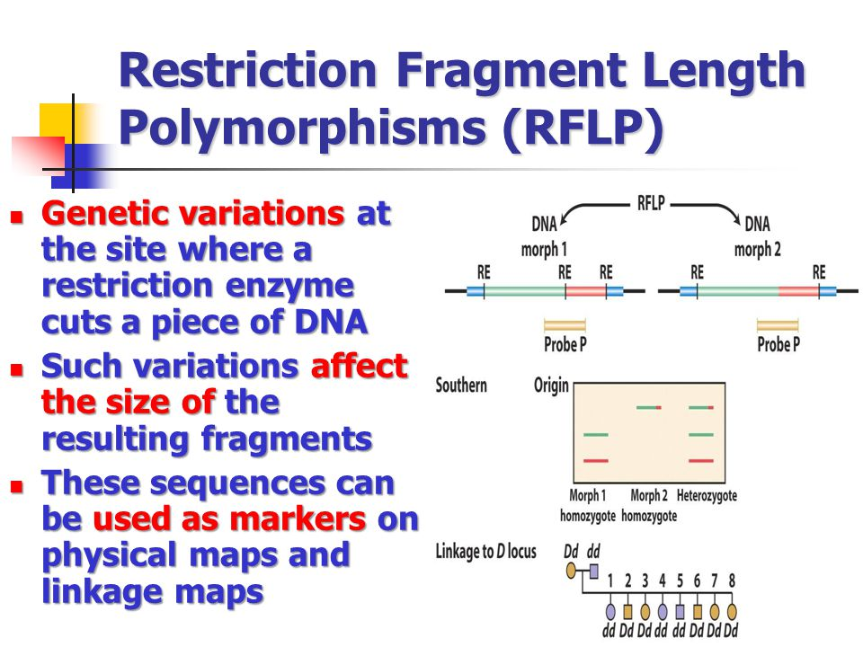 Restriction Fragment Length Polymorphisms (RFLP)