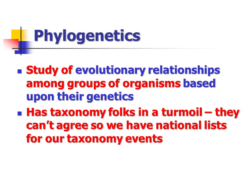 Phylogenetics Study of evolutionary relationships among groups of organisms based upon their genetics.