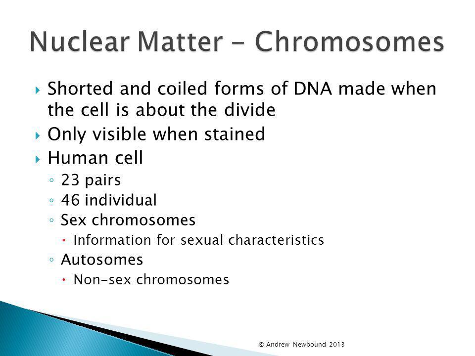 Nuclear Matter - Chromosomes