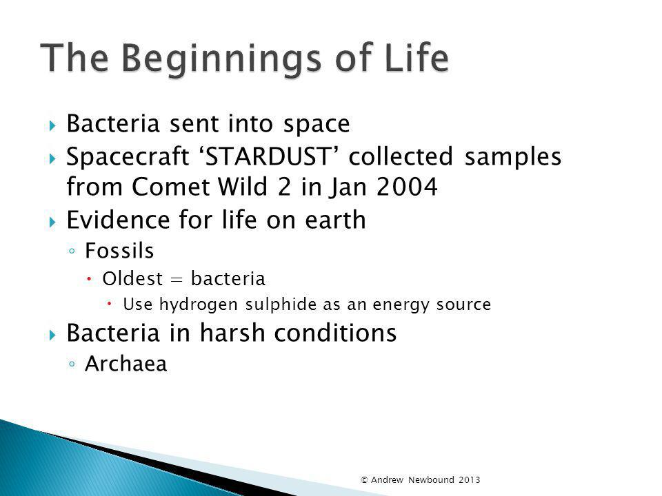 The Beginnings of Life Bacteria sent into space
