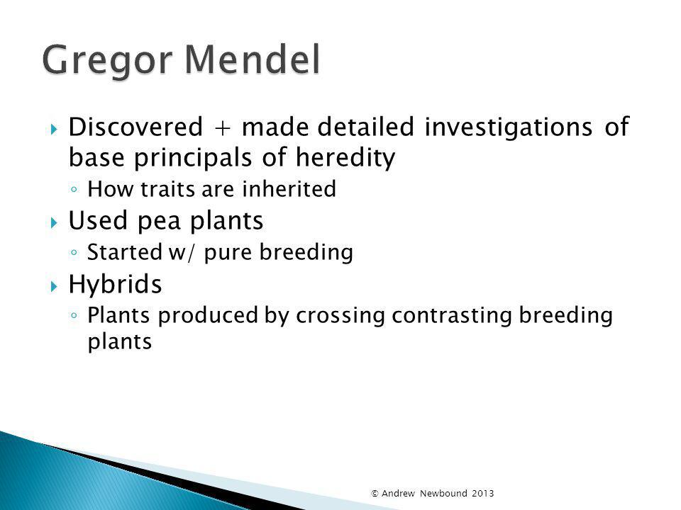 Gregor Mendel Discovered + made detailed investigations of base principals of heredity. How traits are inherited.