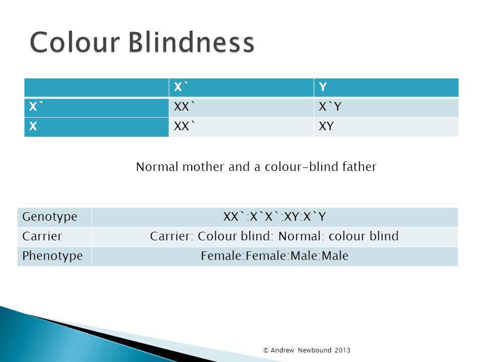 Colour Blindness X` Y XX` X`Y X XY