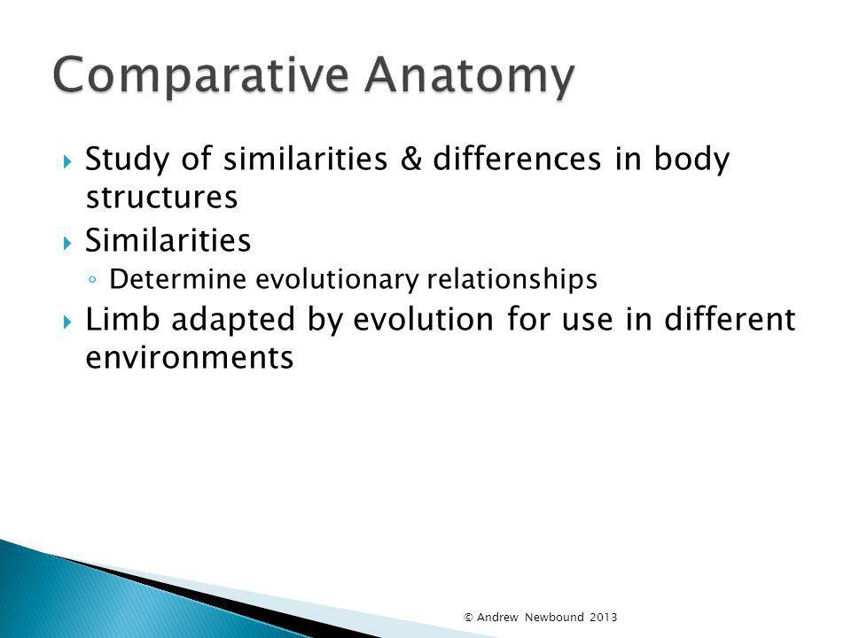 Comparative Anatomy Study of similarities & differences in body structures. Similarities. Determine evolutionary relationships.