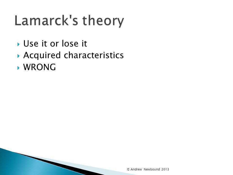 Lamarck s theory Use it or lose it Acquired characteristics WRONG