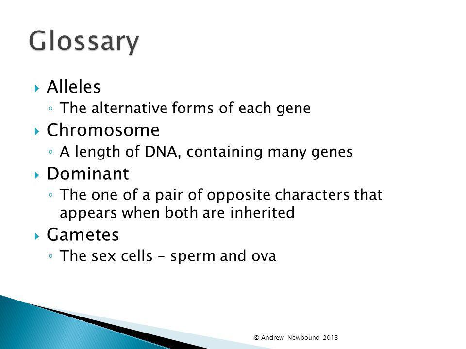 Glossary Alleles Chromosome Dominant Gametes