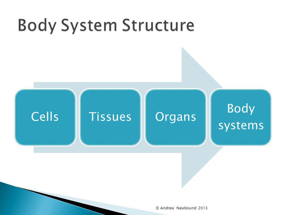 Body System Structure Cells Tissues Organs Body systems
