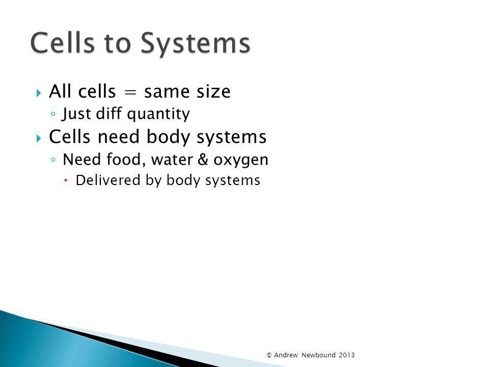 Cells to Systems All cells = same size Cells need body systems