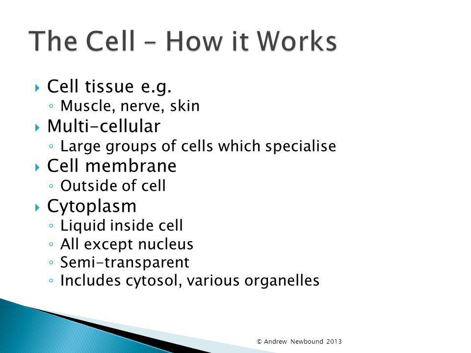 The Cell – How it Works Cell tissue e.g. Multi-cellular Cell membrane
