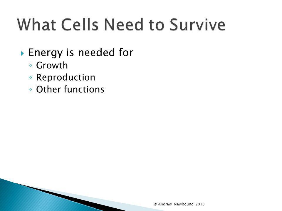 What Cells Need to Survive
