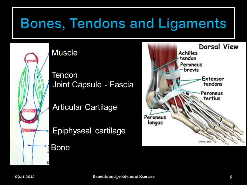 Bones, Tendons and Ligaments