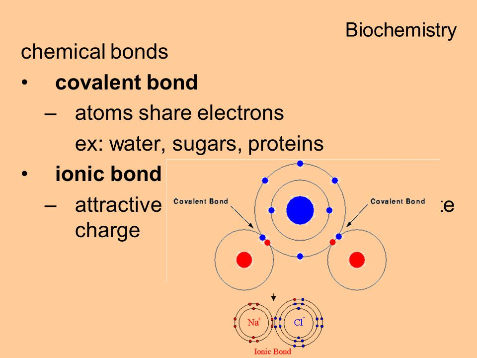 ex: water, sugars, proteins ionic bond