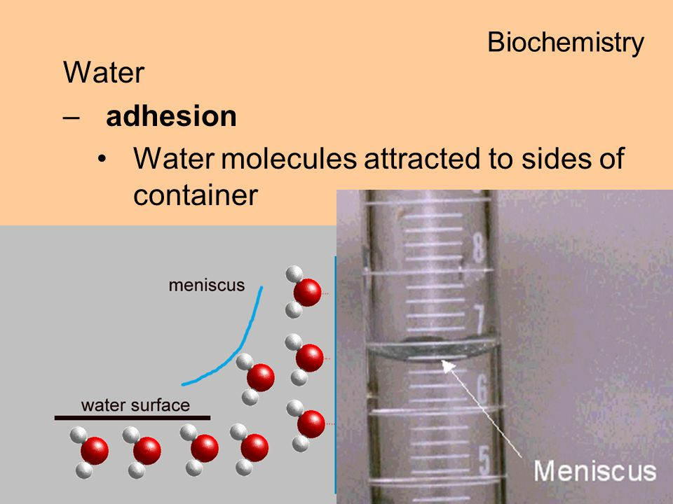 Water molecules attracted to sides of container