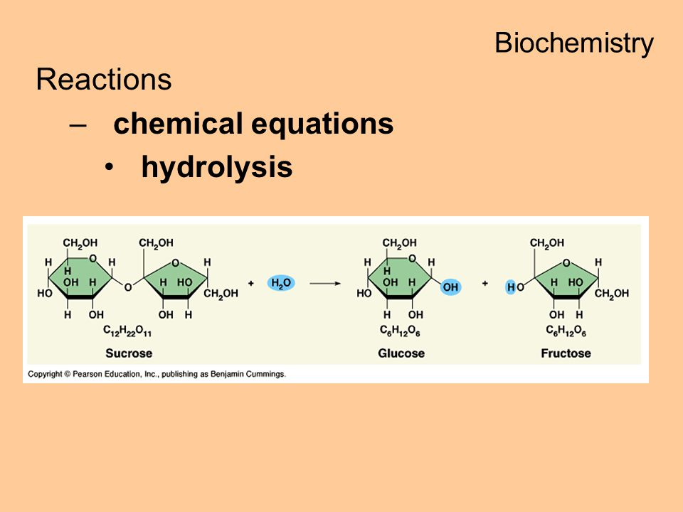 Biochemistry Reactions chemical equations hydrolysis