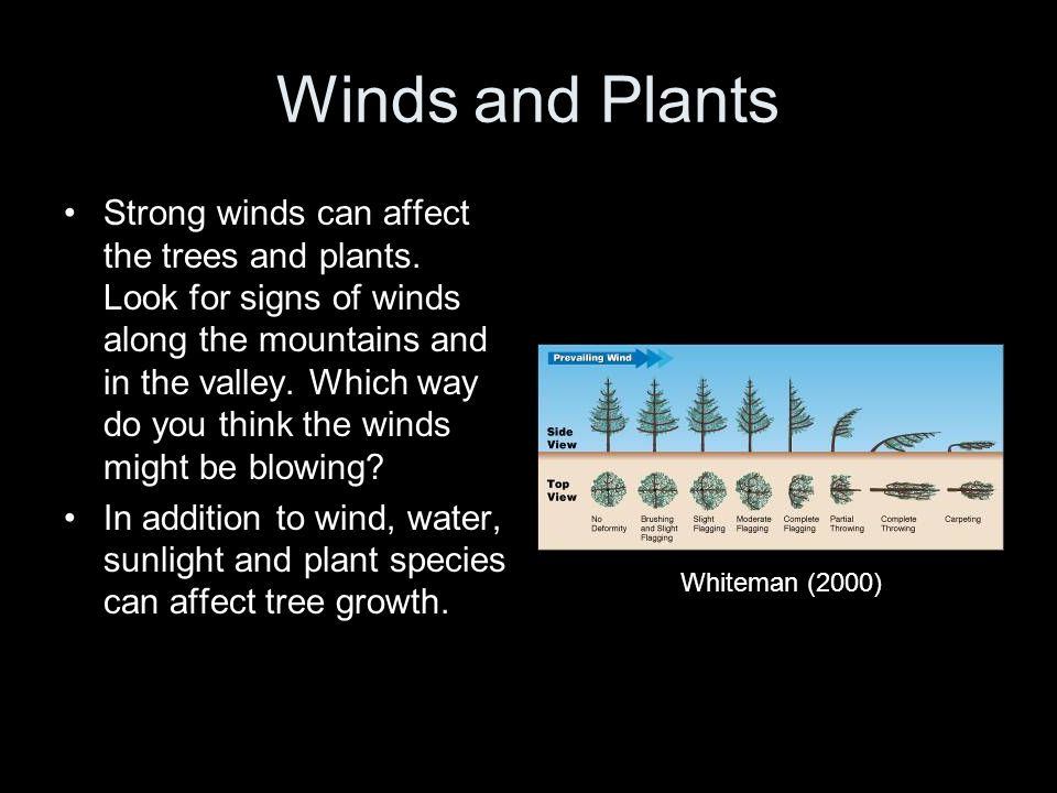 Winds and Plants