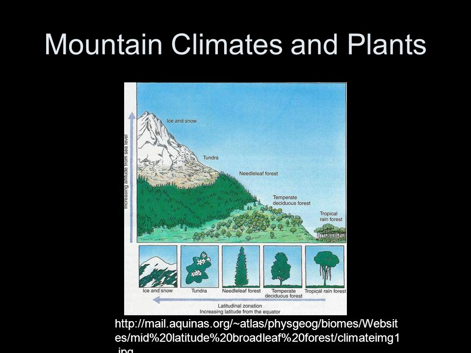 Mountain Climates and Plants