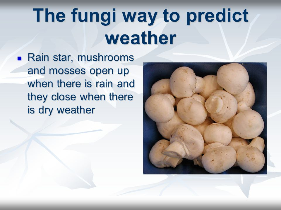 The fungi way to predict weather