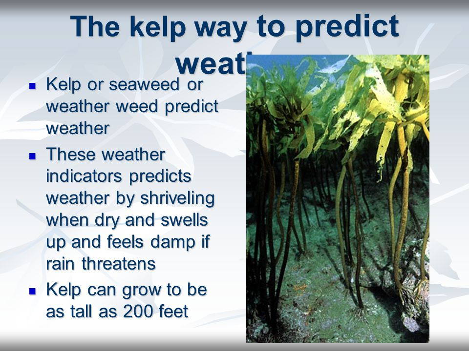 The kelp way to predict weather