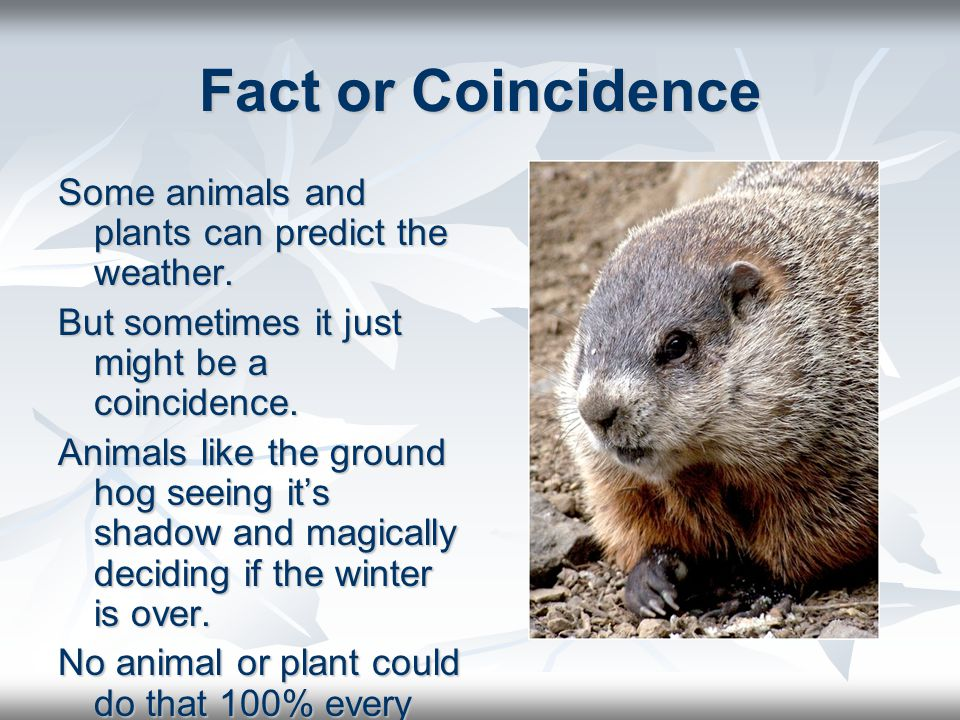 Fact or Coincidence Some animals and plants can predict the weather.