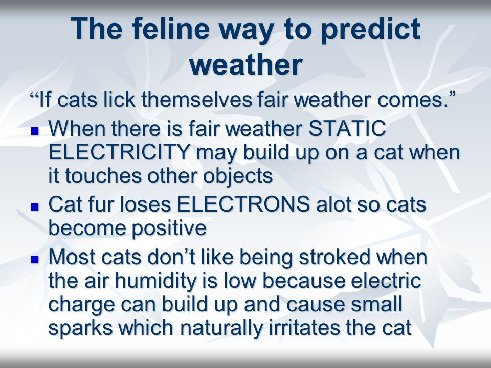 The feline way to predict weather