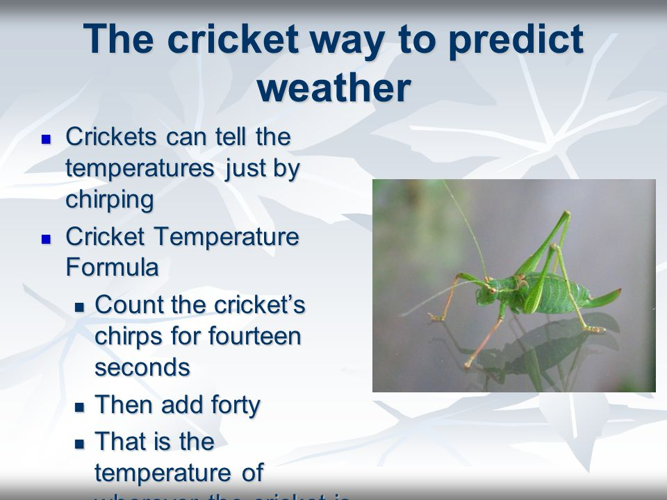 The cricket way to predict weather
