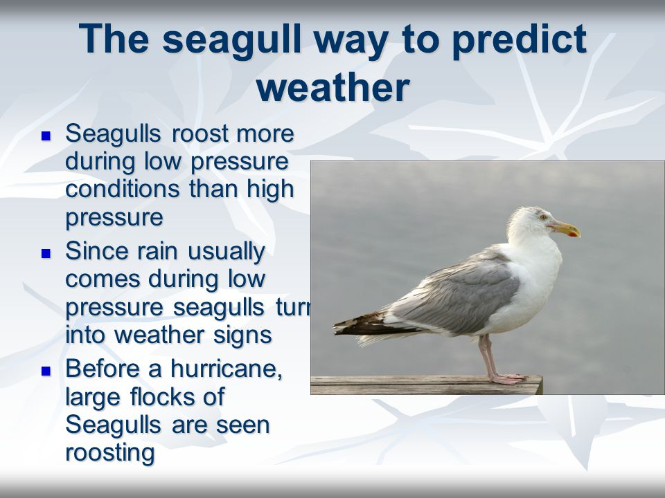 The seagull way to predict weather