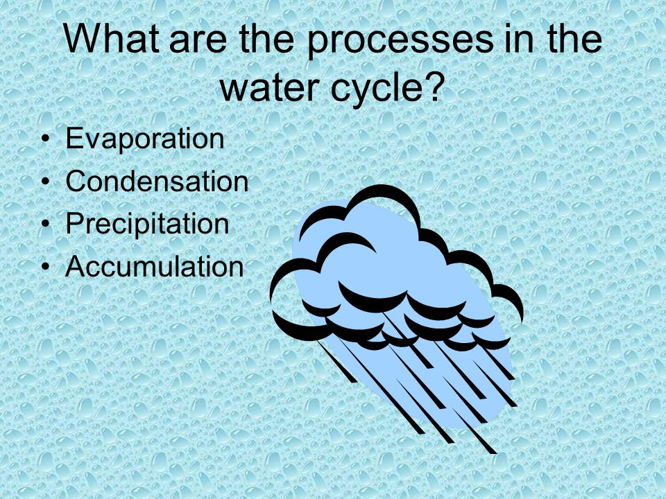 What are the processes in the water cycle