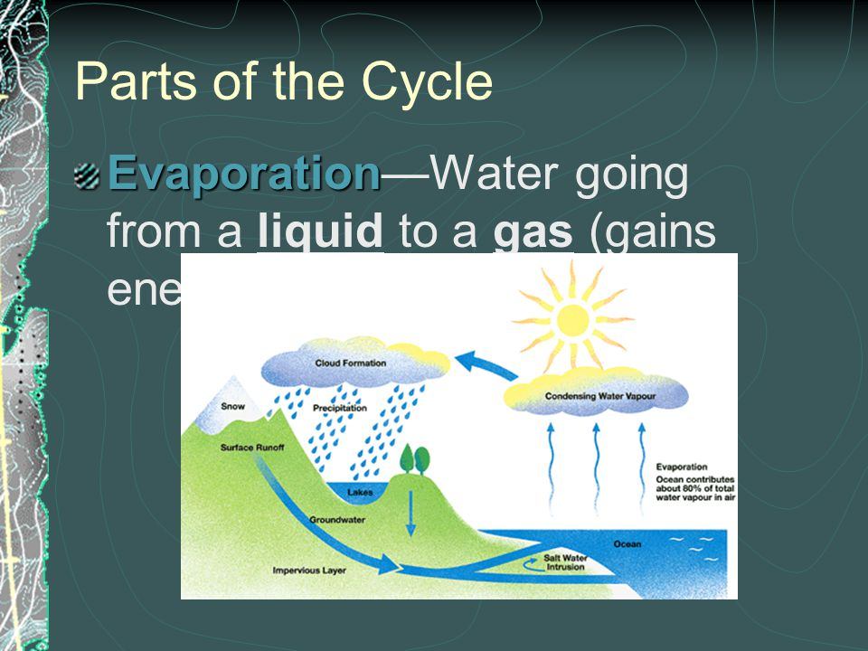 Parts of the Cycle Evaporation—Water going from a liquid to a gas (gains energy from the sun)